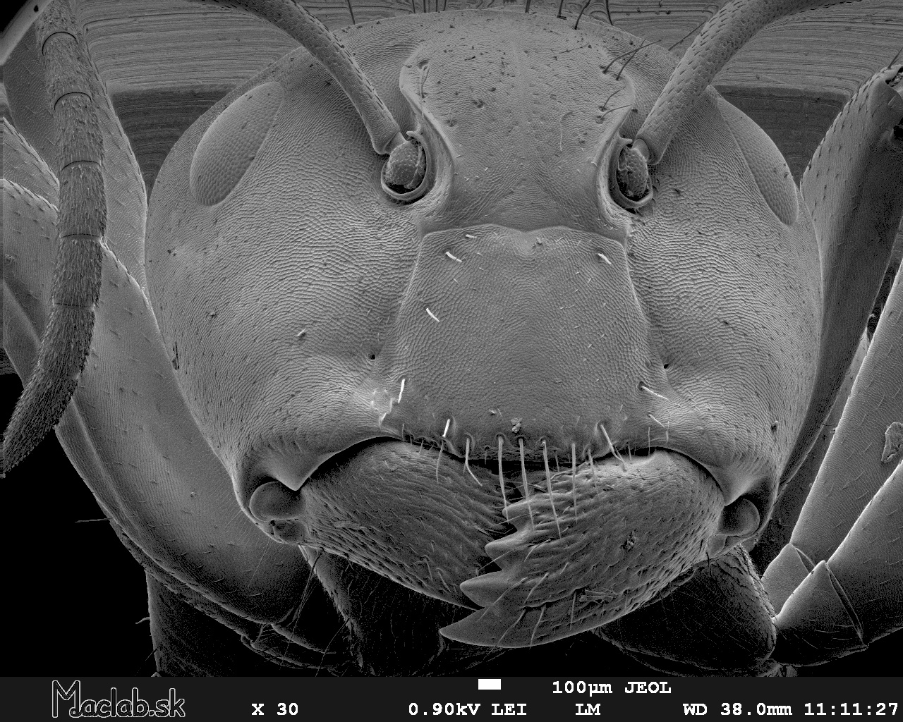ant under a microscope - photo #4